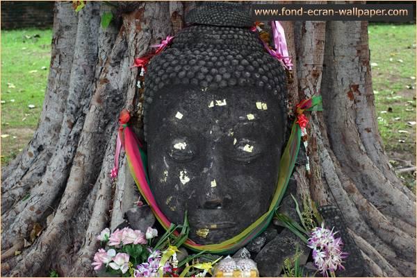 Vorschau Thailand Wallpaper 1024 - Bild 1
