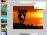 Vorschau Web Photo Gallery Manager Freeware Edition - Bild 1
