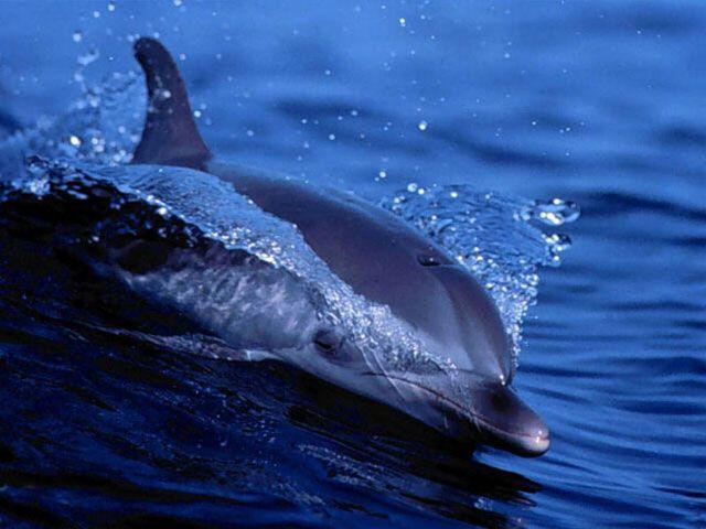 Vorschau Free Living Dolphins Screensaver - Bild 1