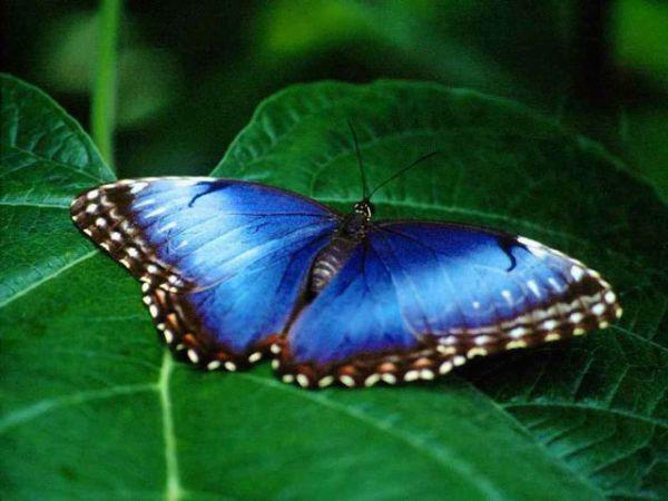 Vorschau Free Living Butterfly Screensaver - Bild 1