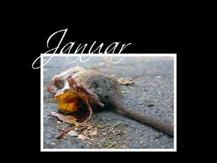 Vorschau Tier und Verderben 2004 - Bild 1