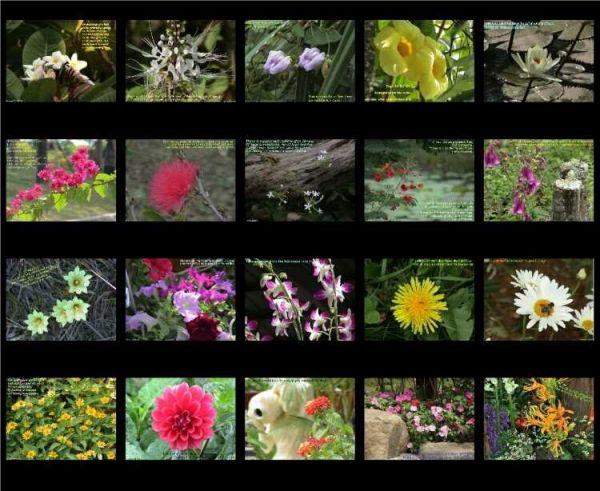 Vorschau Blossoms of the East - Bild 1