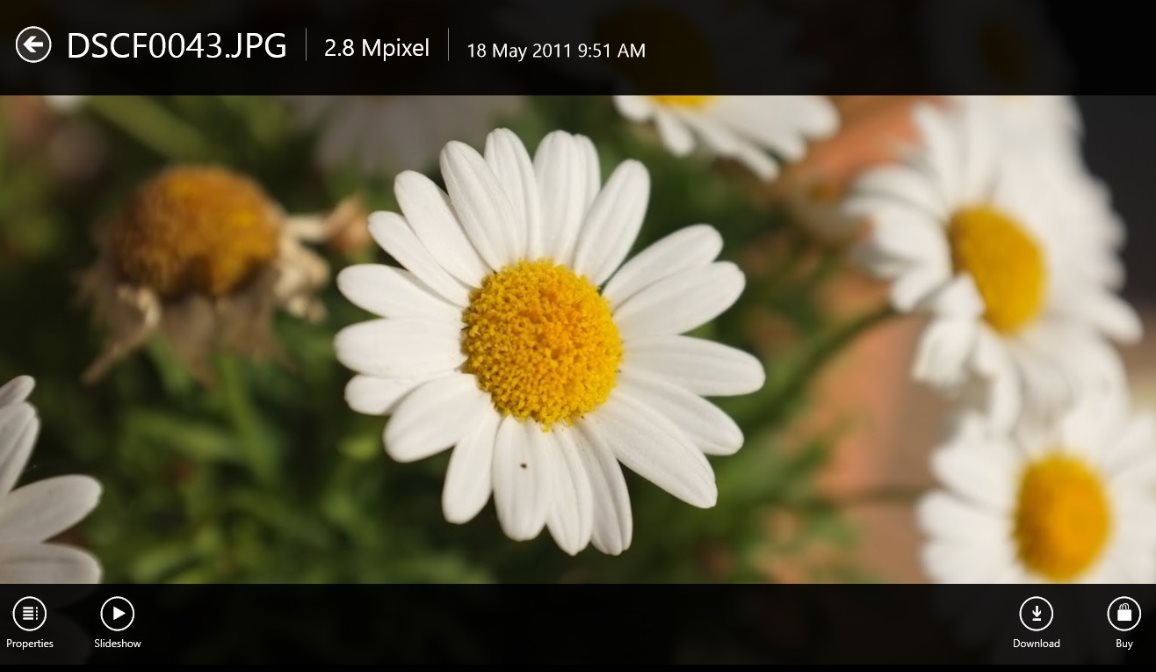 Vorschau Picasa Viewer HD fuer Windows 8 und 10 - Bild 4